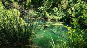 Озеро в KRKA Стоковая Фотография RF