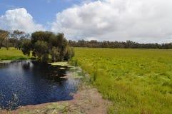 Озеро в paddock с деревьями paperbark Стоковые Изображения RF