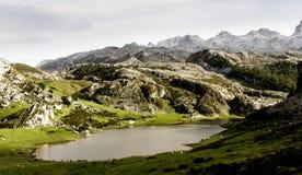 Озеро гор при животные пася Стоковая Фотография