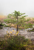 Озеро головорез в тумане Стоковое Изображение