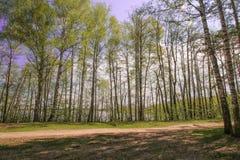 Озеро голубого неба волшебного яркого леса солнца весны красивое солнечное Стоковое фото RF