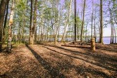 Озеро голубого неба волшебного яркого леса солнца весны красивое солнечное Стоковое Фото