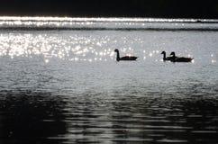 озеро гусынь сверкная Стоковое Изображение