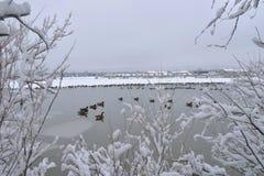 Озеро гусын зимы Стоковое Изображение
