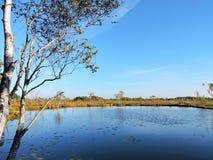 Озеро, деревья и красивое чистое небо, Литва Стоковое Фото