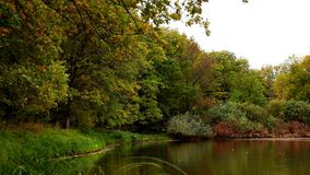 Озеро древесин сток-видео