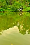 Озеро лебед ботанических садов Сингапура Стоковая Фотография