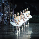 Озеро лебед очеред-балета лебедя стоковое изображение rf