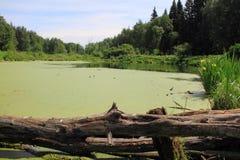 Озеро леса Стоковое Изображение RF