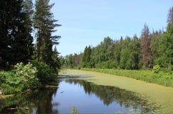 Озеро леса Стоковое Изображение