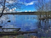 Озеро леса Delamere стоковые изображения
