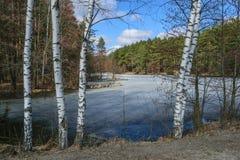 Озеро лес весной на солнечный день Стоковое Изображение