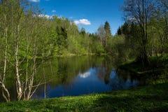 Озеро лес на солнечный день Стоковая Фотография RF