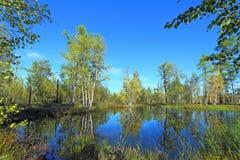 Озеро лес осенью Стоковые Фотографии RF