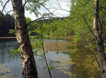 Озеро лес с березами и листьями стоковая фотография rf