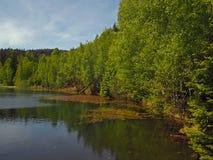 Озеро лес с свежими зелеными деревьями стоковая фотография