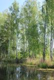 Озеро лес Стоковые Фото