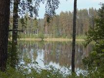 Озеро лес Стоковые Изображения RF