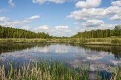 Озеро лес Стоковое фото RF