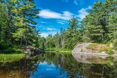 Озеро лес Стоковое Изображение