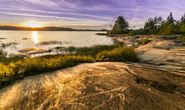 Озеро лес Стоковая Фотография RF