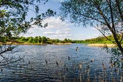 Озеро лет около леса стоковые изображения