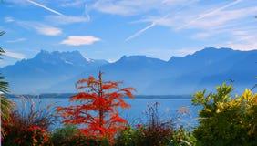Озеро Женева. Швейцария. Стоковое Изображение RF