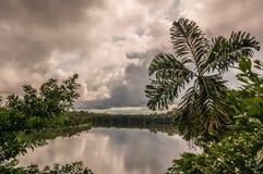 Озеро джунглей Амазонки Стоковое фото RF