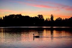 Озеро заход солнца с отражением Стоковые Изображения