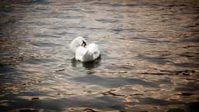 Озеро Италия Iseo Стоковое Изображение RF