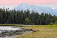 Озеро и гусыни Стоковое Фото