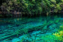 Озеро и деревья в Jiuzhaigou Valley, Сычуань, Китае стоковые фотографии rf