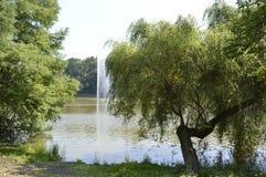 Озеро и дерево Стоковая Фотография