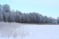 Озеро и лес зим Стоковое Изображение