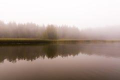 Озеро и кровать тростников Спокойная и туманная погода Стоковые Изображения RF