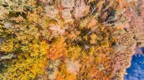 Озеро и лес с красочными листьями, воздушный взгляд осени трутня стоковые фотографии rf
