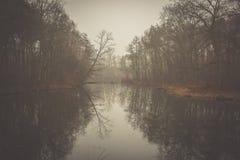 Озеро и пуща Стоковые Фотографии RF