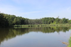 Озеро и пуща стоковое изображение rf