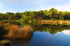 Озеро и сосновые леса Koukounaries в острове Греции skiathos стоковые фото