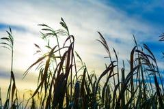 Озеро и трава Стоковая Фотография