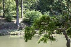 Озеро и утки в лесе стоковые фото