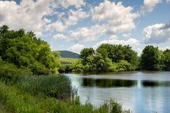 Озеро и Bulrushes Стоковые Изображения
