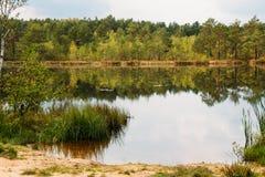 Озеро и coniferous лес стоковая фотография rf