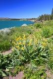 Озеро и Wildflowers Йеллоустон стоковые изображения rf