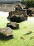 Озеро карп Стоковое Изображение RF
