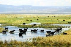 озеро козочки Стоковое фото RF