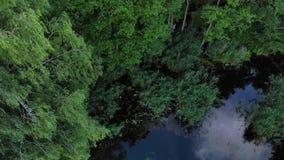 Озеро! Красивое озеро в лесе акции видеоматериалы