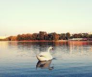 Озеро лебед стоковое изображение rf
