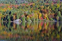 Озеро лес стоковые изображения