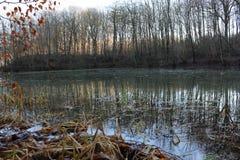 Озеро лес, Bygholm, Horsens, wintertime, природа Стоковая Фотография RF